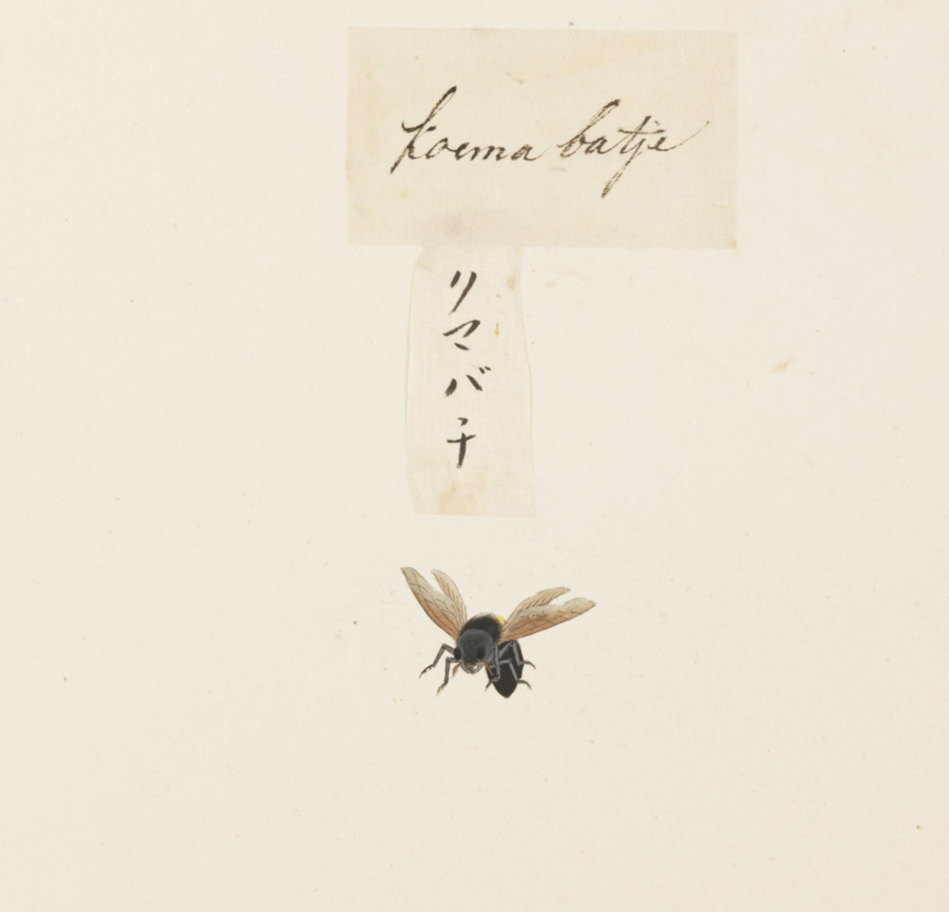RMNH.ART.575 | Xylocopa appendiculata