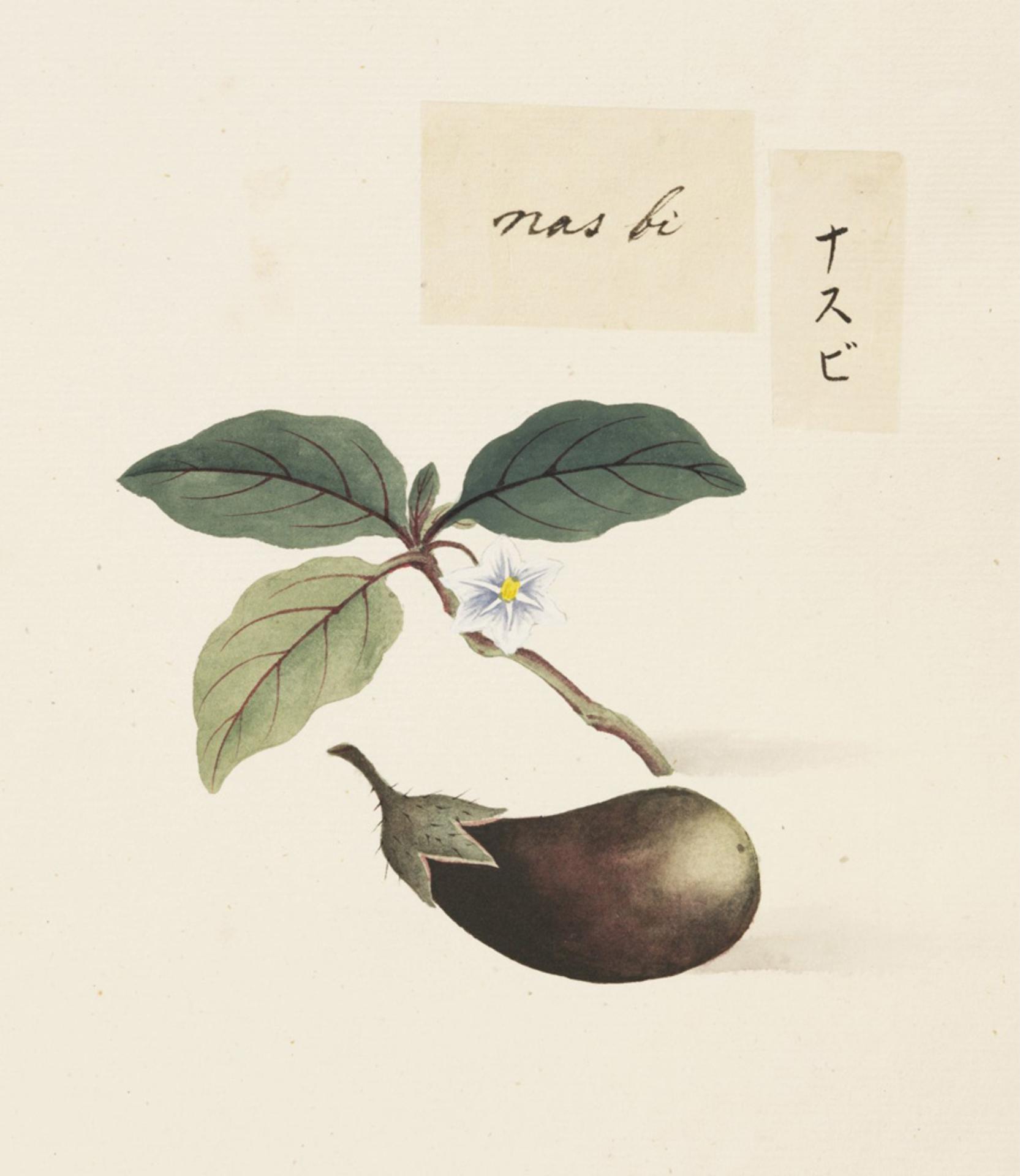 RMNH.ART.622 | Solanum melongena