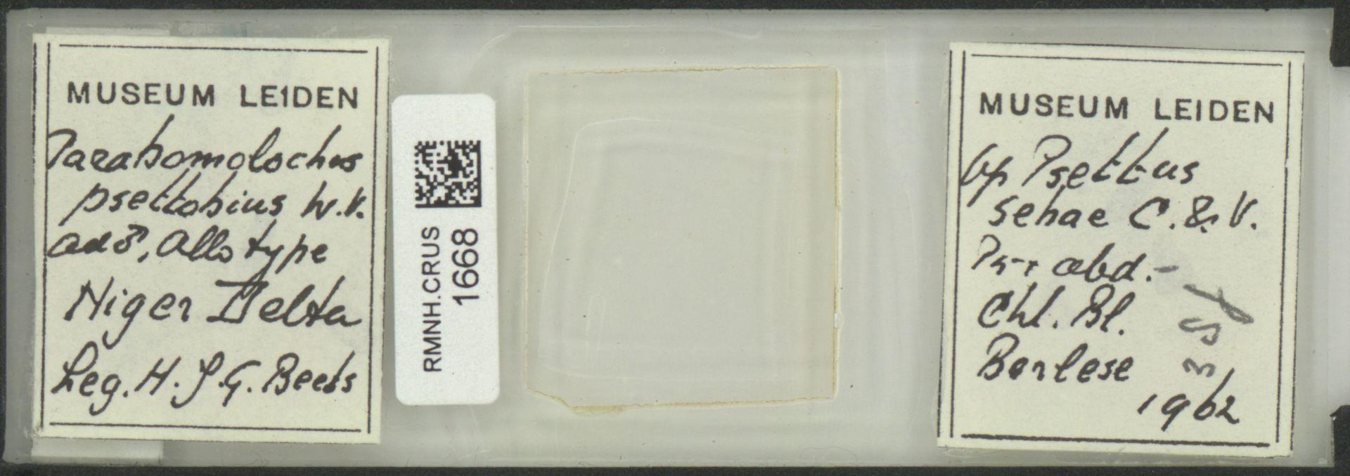 RMNH.CRUS.1668 | Parabomolochus psettobius Vervoort, 1962