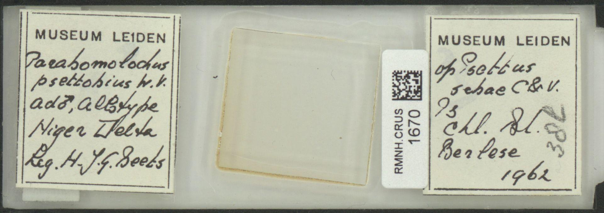 RMNH.CRUS.1670 | Parabomolochus psettobius Vervoort, 1962