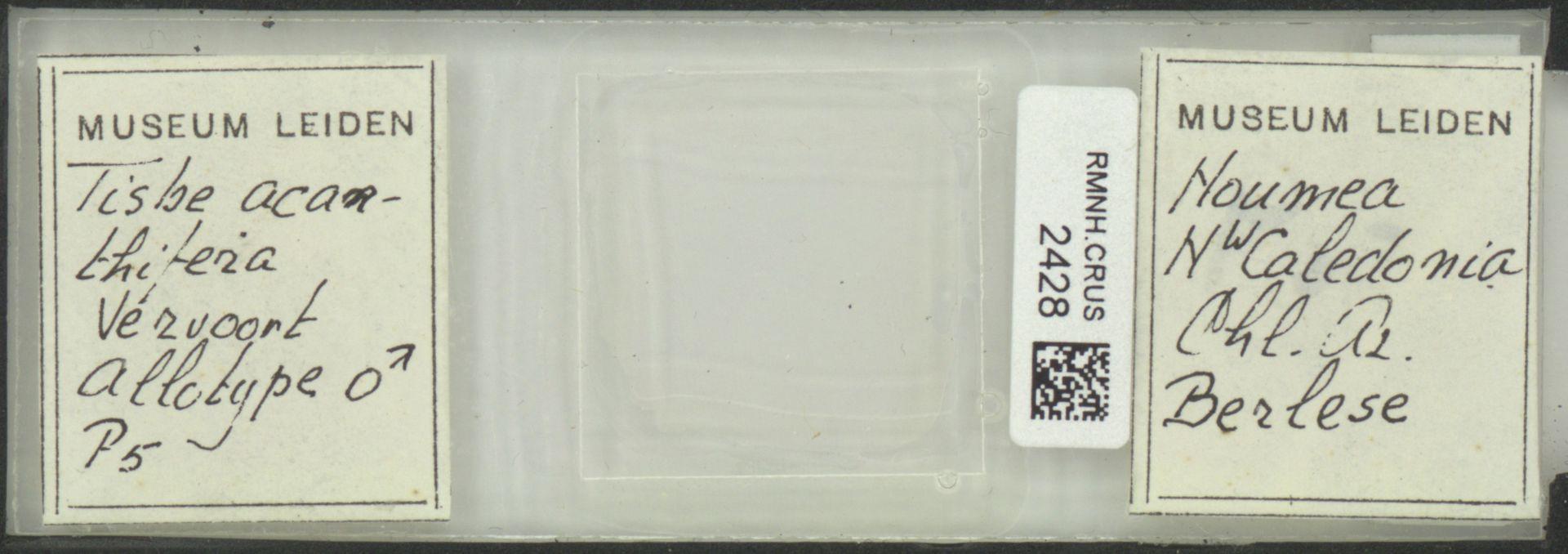 RMNH.CRUS.2428 | Tisbe acanthifera Vervoort, 1962