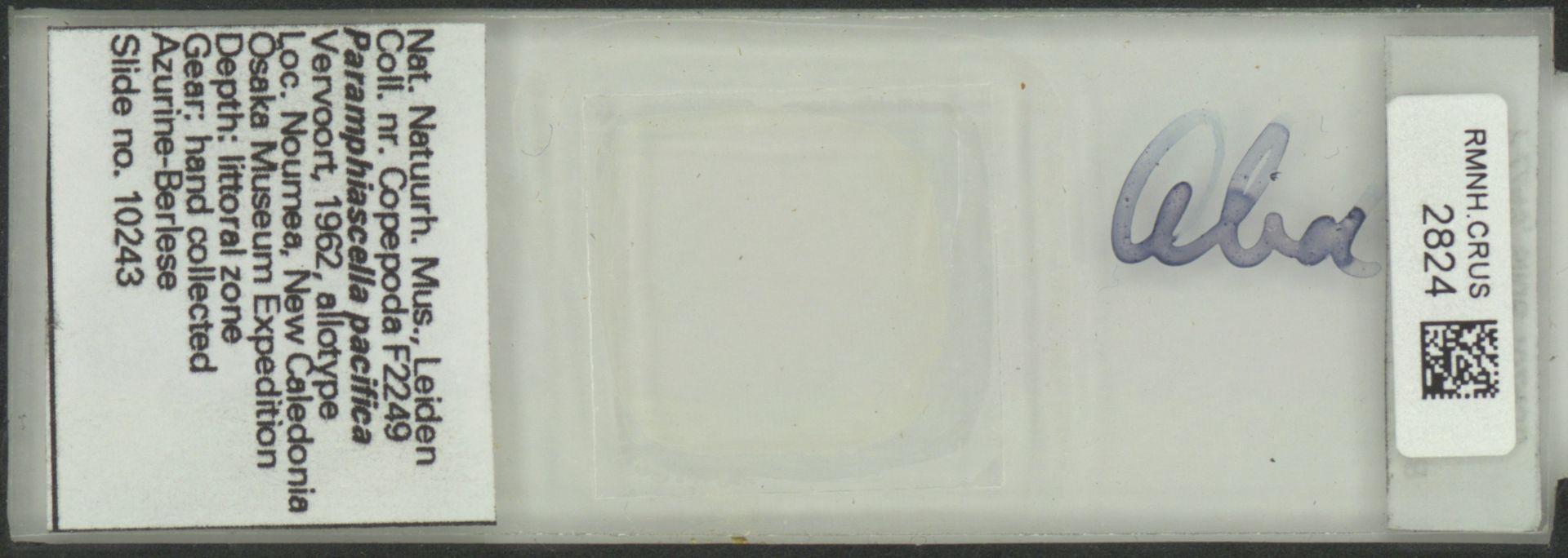 RMNH.CRUS.2824 | Paramphiascella pacifica Vervoort, 1962