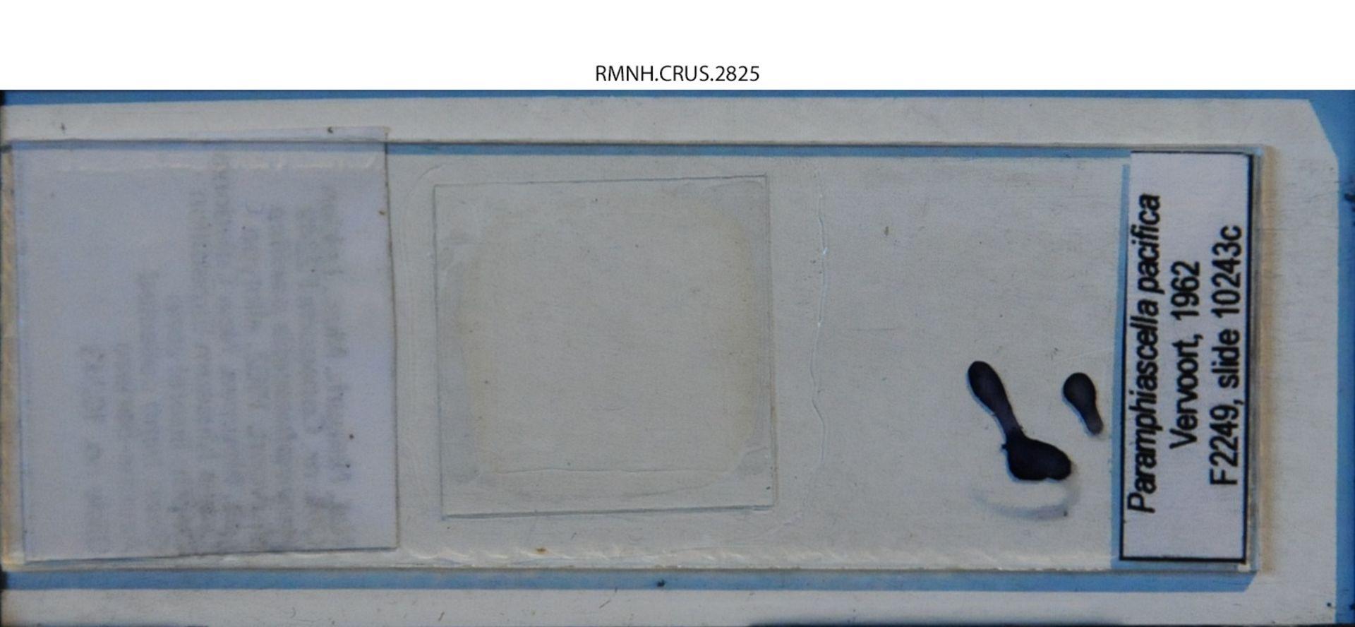 RMNH.CRUS.2825 | Paramphiascella pacifica Vervoort, 1962