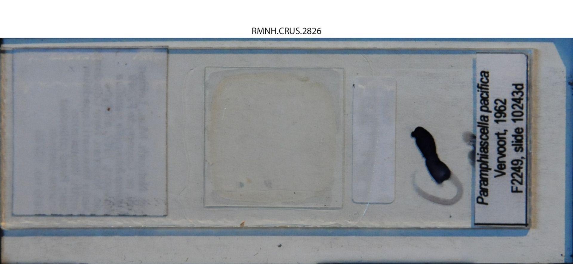 RMNH.CRUS.2826   Paramphiascella pacifica Vervoort, 1962