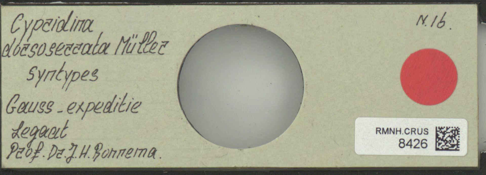 RMNH.CRUS.8426 | Cypridina dorsoserrata Müller