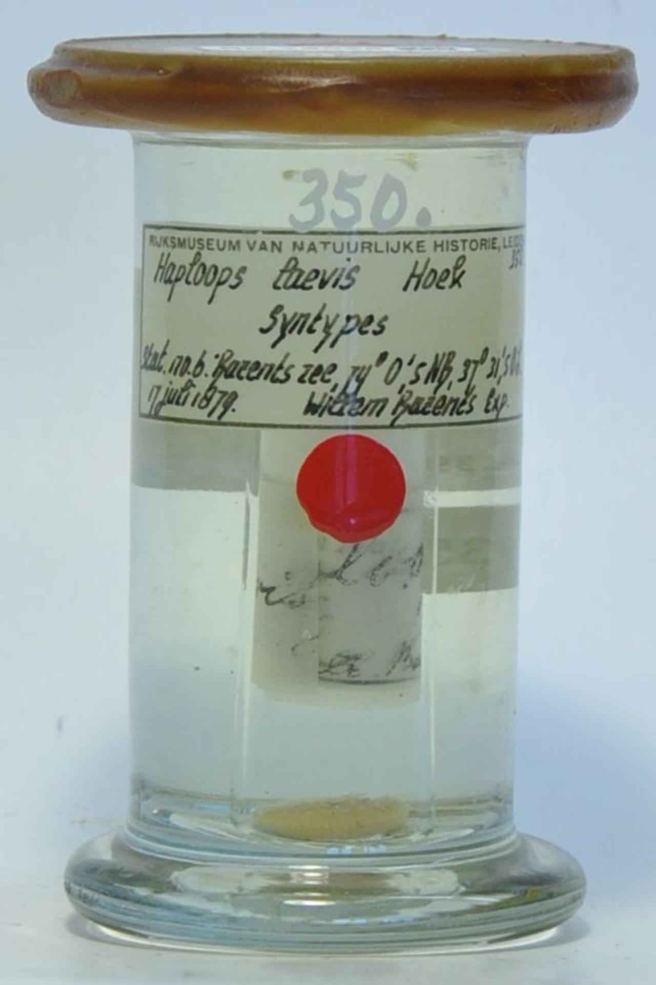 RMNH.CRUS.A.350 | Haploops laevis Hoek