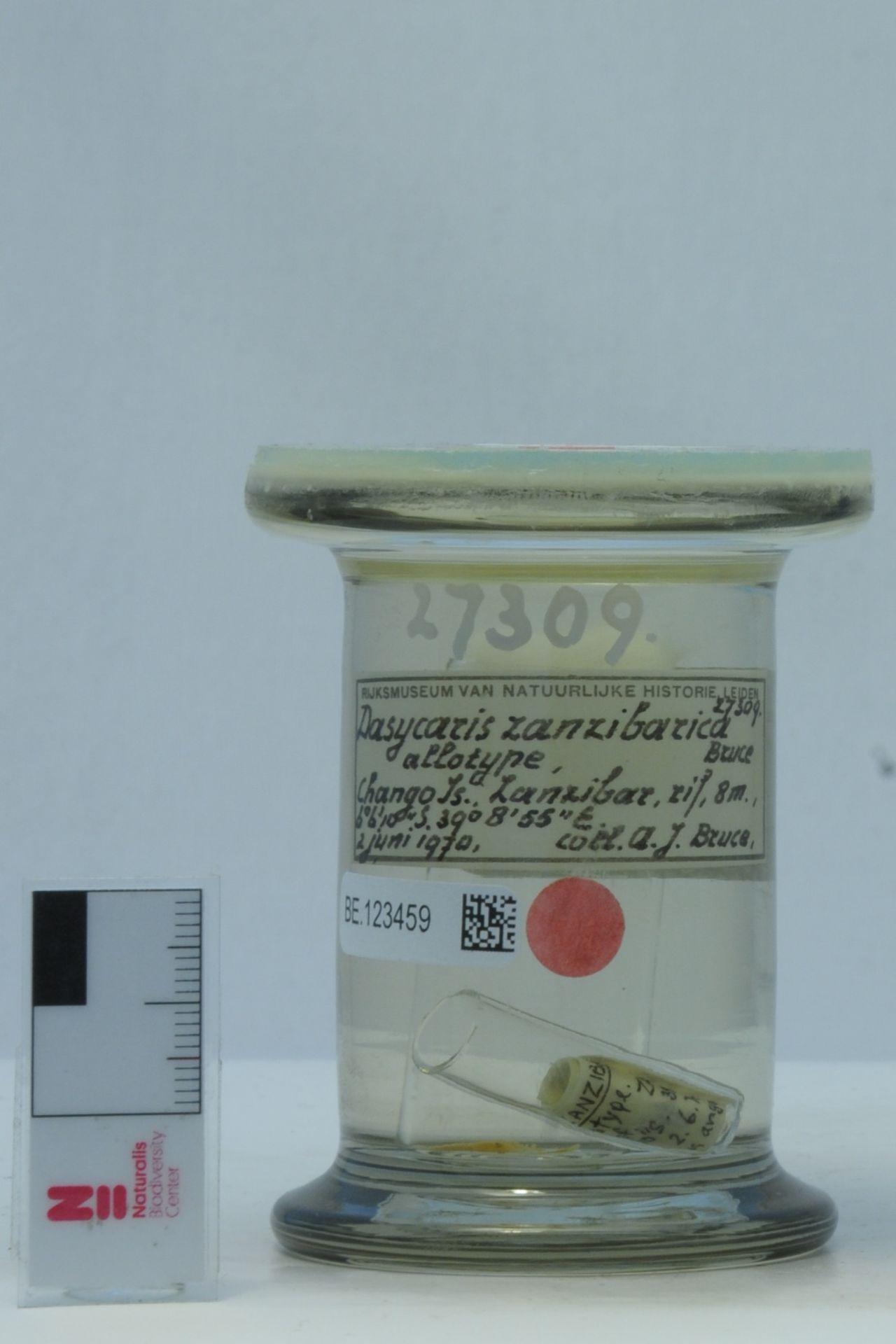 RMNH.CRUS.D.27309 | Dasycaris zanzibarica Bruce, 1973