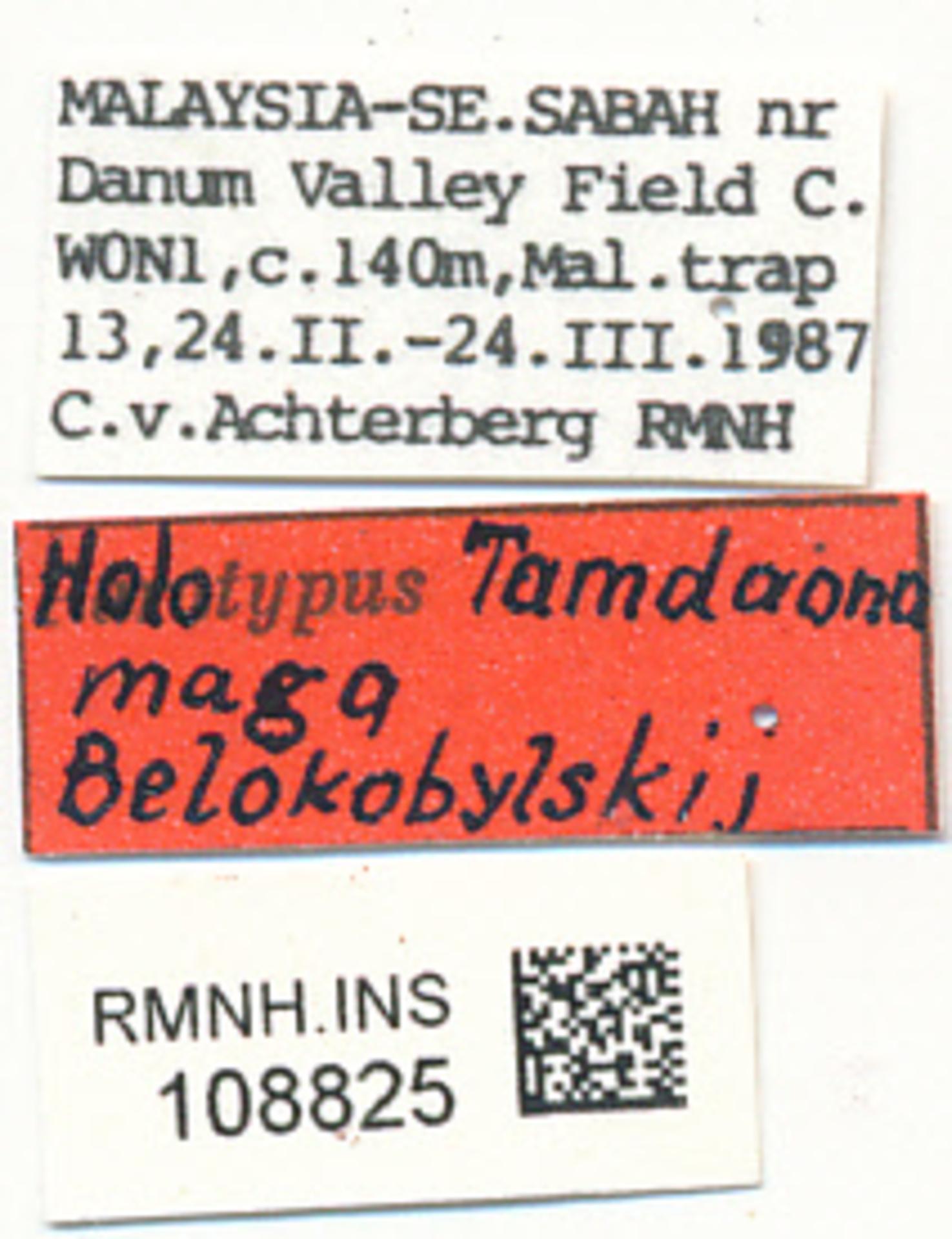 RMNH.INS.108825 | Tamdaona maga Belokobylskij, 1992