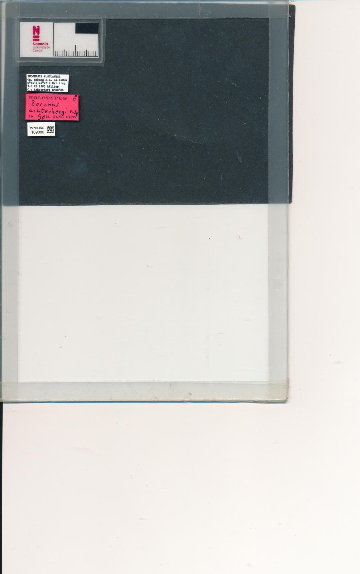 RMNH.INS.109006 | Bocchus achterbergi Olmi, 1991