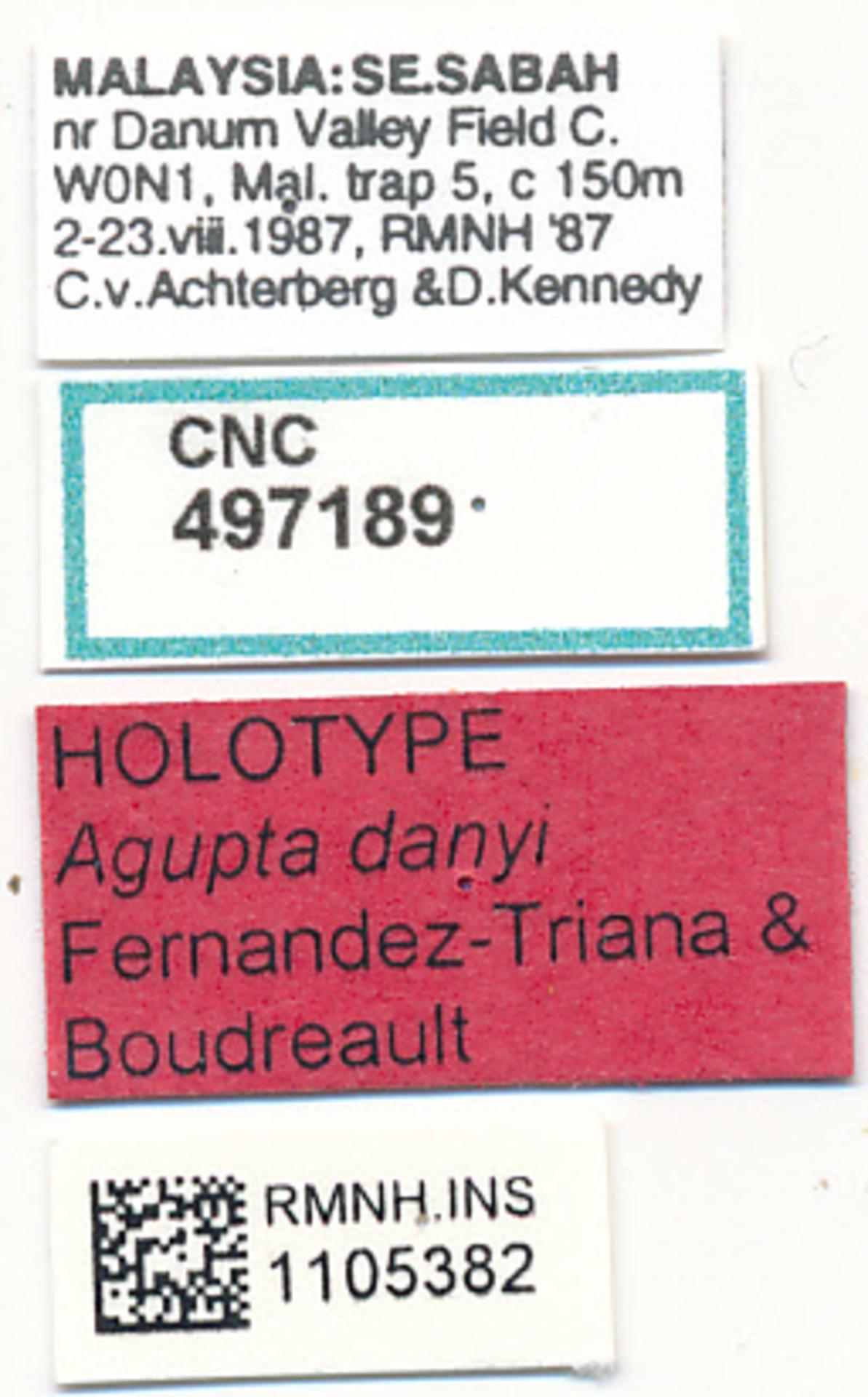RMNH.INS.1105382   Agupta danyi Fernandez-Triana & Boudreault, 2018