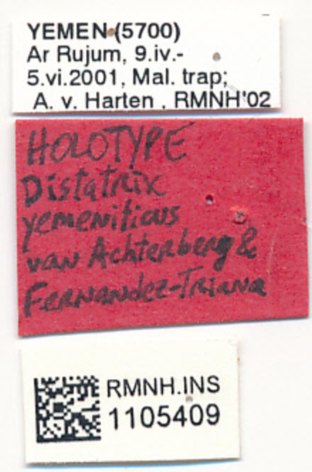 RMNH.INS.1105409 | Distatrix yemeniticus van Achterberg & Fernandez-Triana, 2017