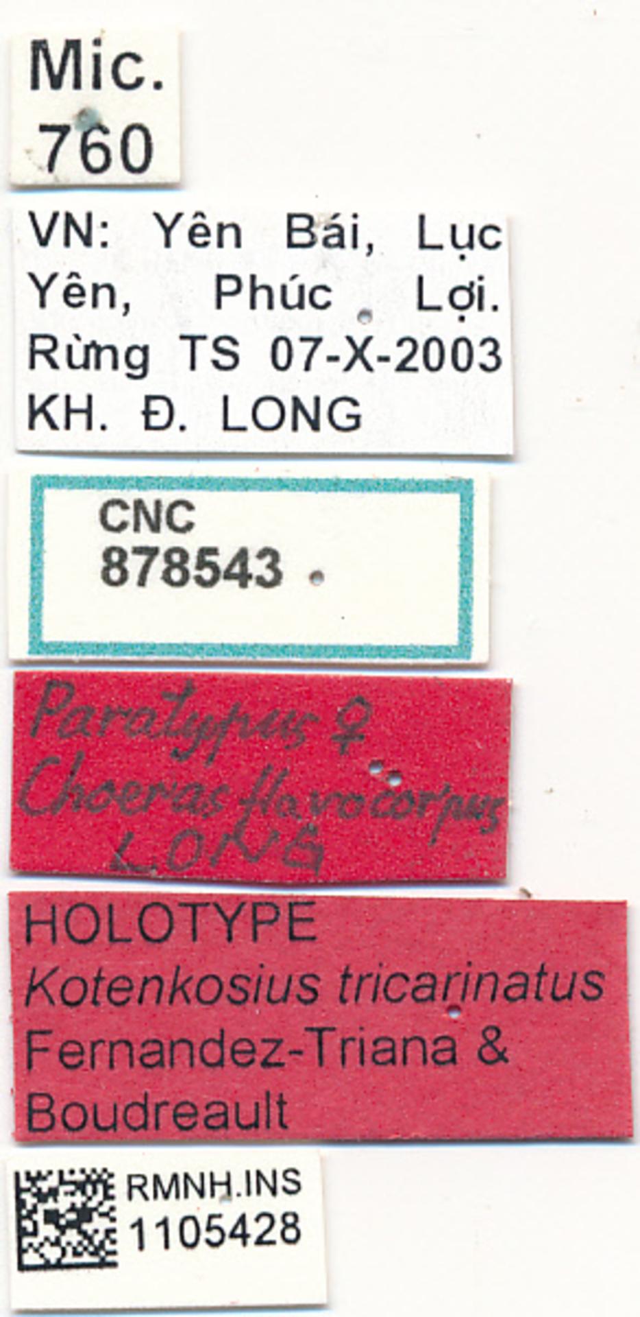 RMNH.INS.1105428 | Kotenkosius tricarinatus Fernandez-Triana & Boudreault, 2018