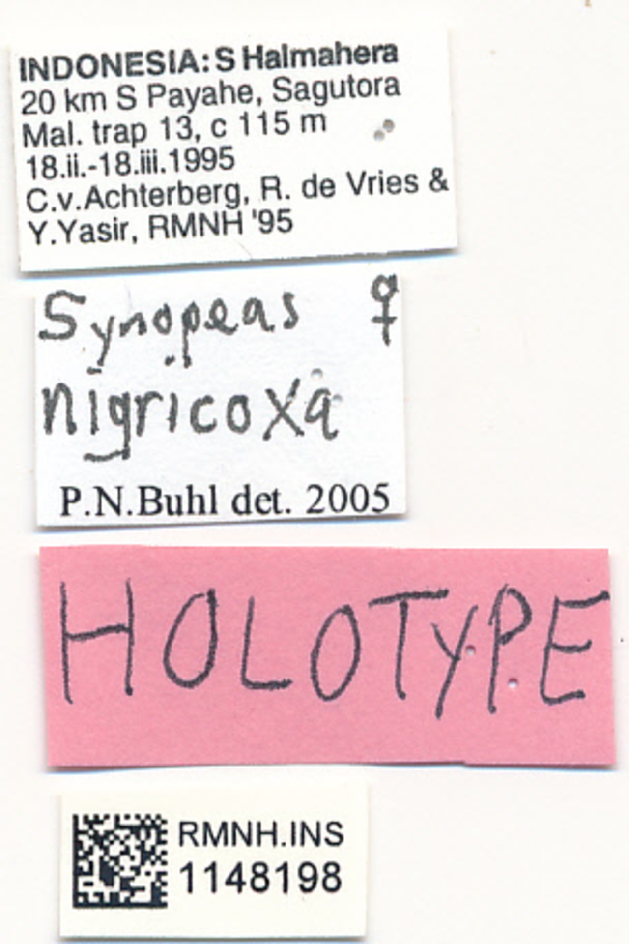 RMNH.INS.1148198 | Synopeas nigricoxa Buhl, 2008
