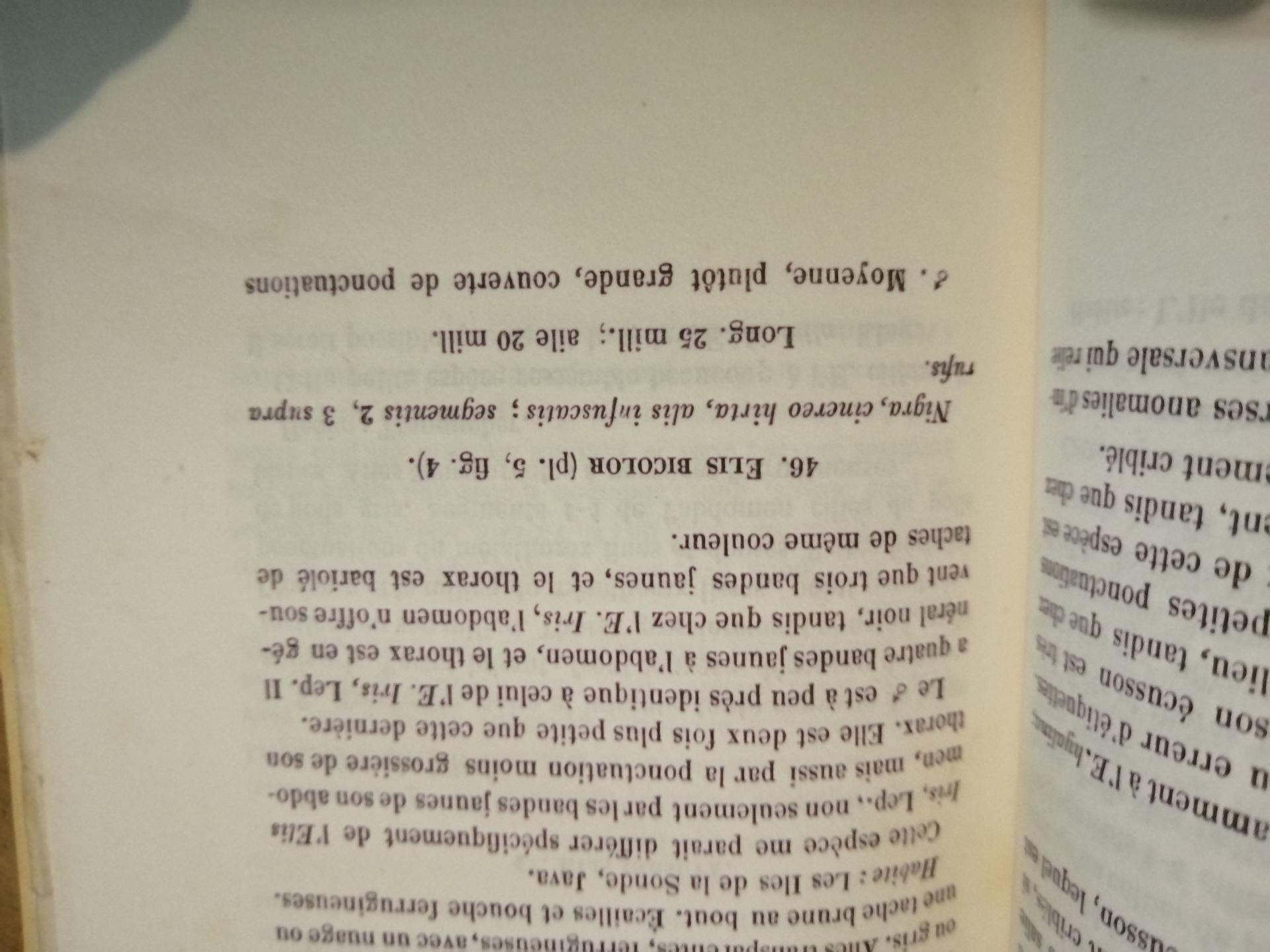 RMNH.INS.1283473 | Campsomeris bicolor Saussure, 1858