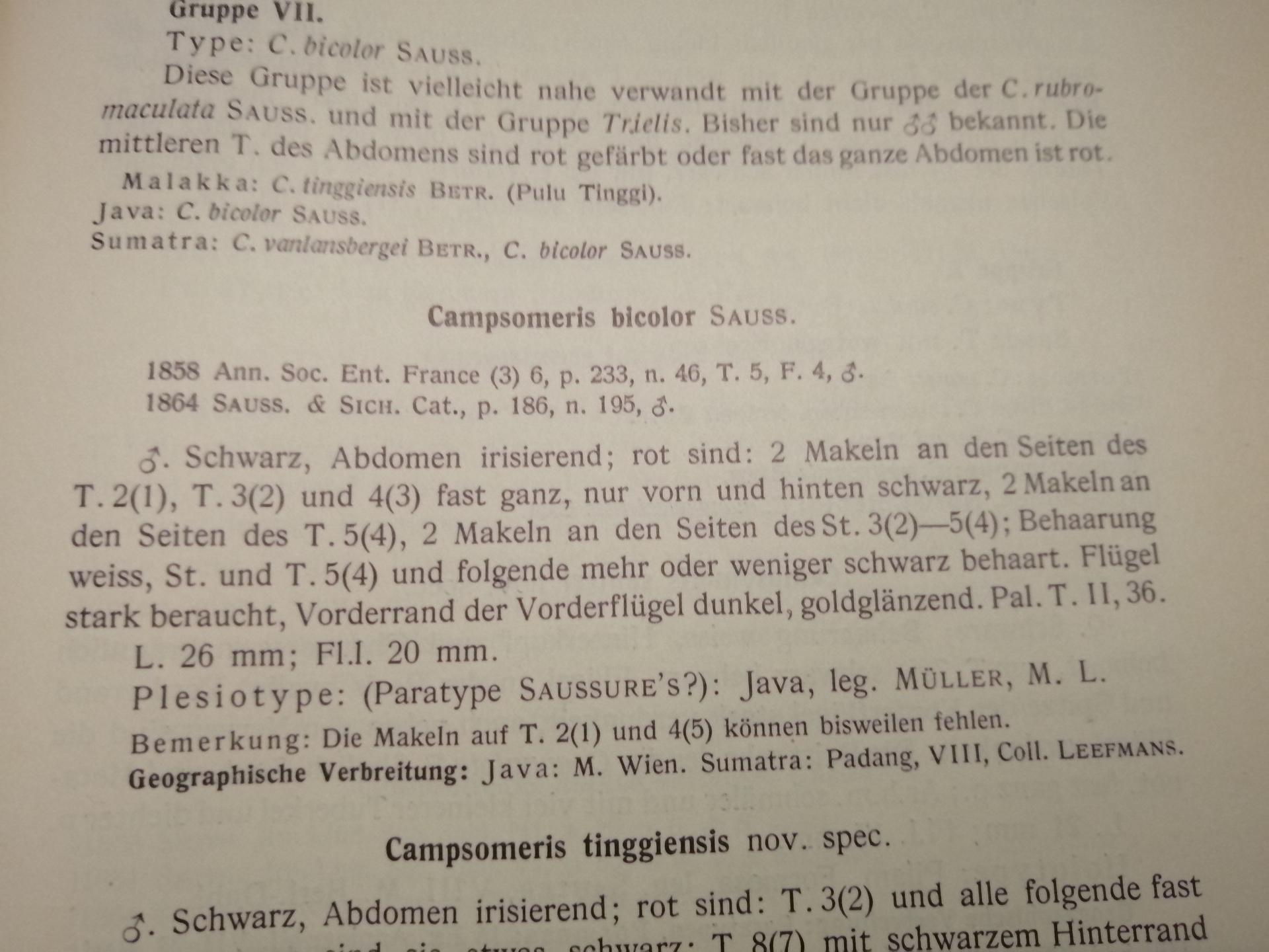 RMNH.INS.1283475 | Campsomeris bicolor Saussure, 1858