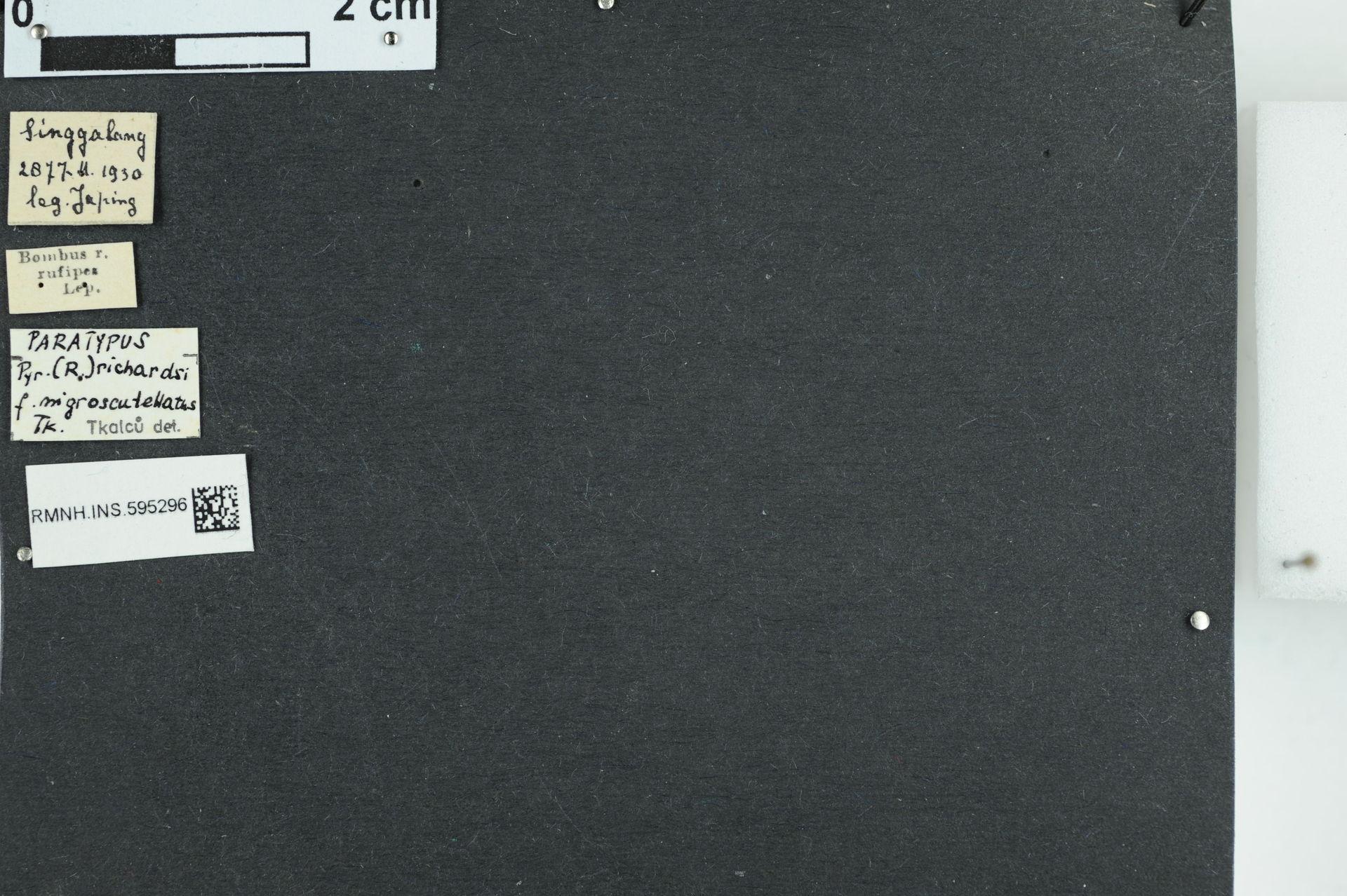 RMNH.INS.595296 | Bombus (Pyrobombus) richardsi
