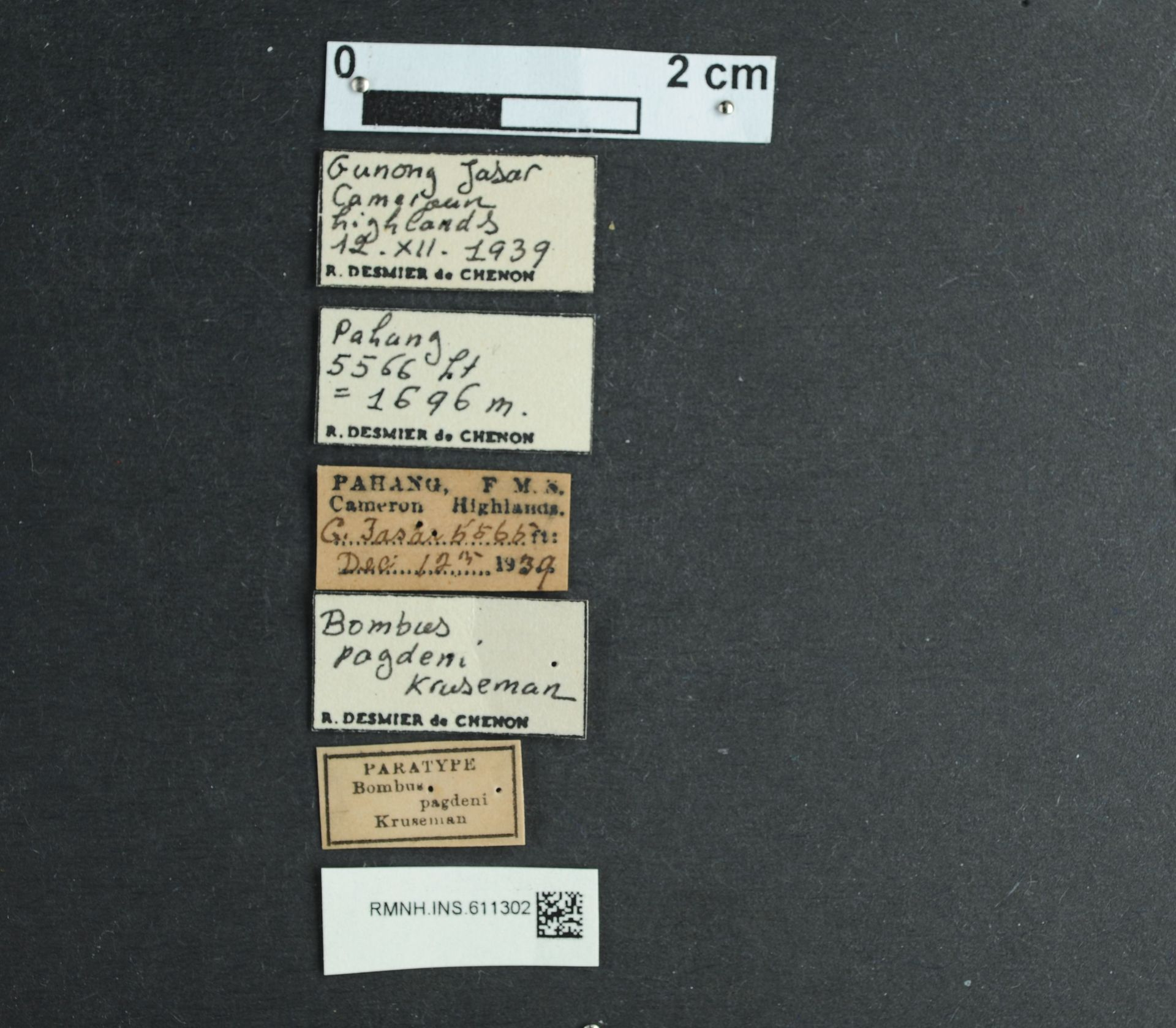 RMNH.INS.611302 | Bombus pagdeni Kruseman