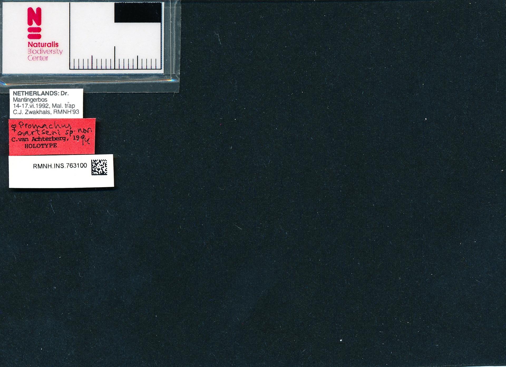 RMNH.INS.763100 | Promachus aartseni van Achterberg, 1994