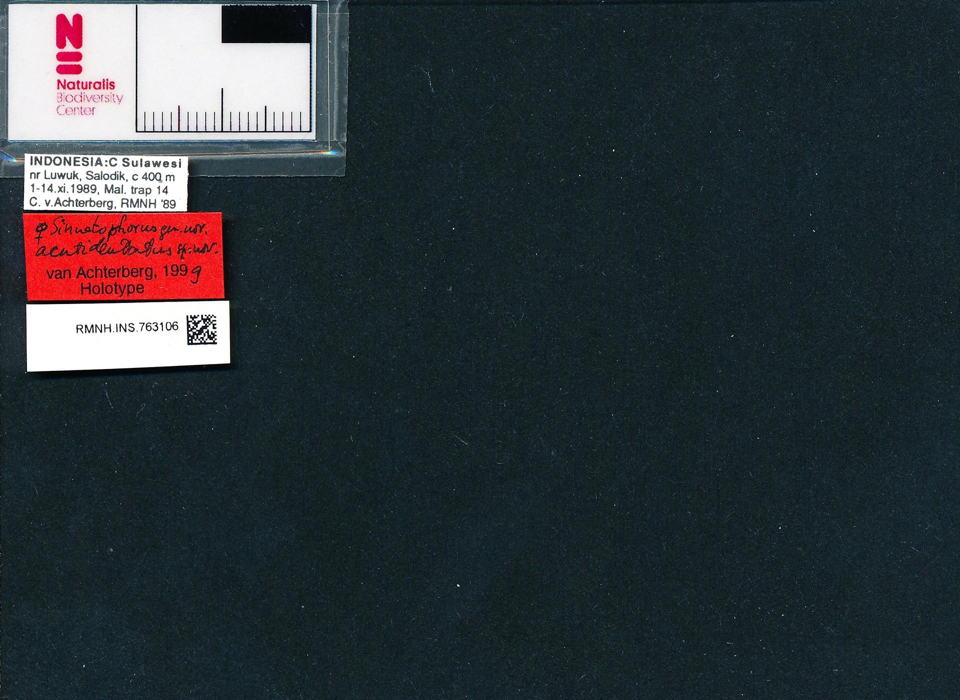 RMNH.INS.763106 | Sinuatophorus acutidentatus van Achterberg, 2000