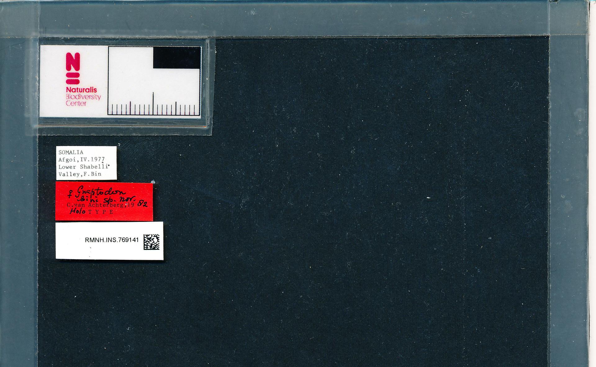 RMNH.INS.769141 | Gnaptodon bini C. van Achterberg, 1982
