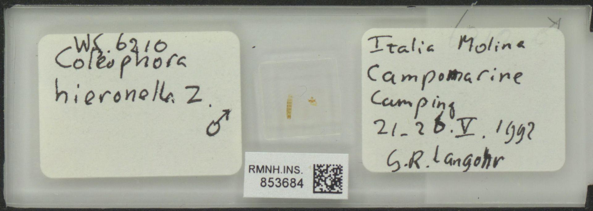 RMNH.INS.853684 | Coleophora hieronella Z