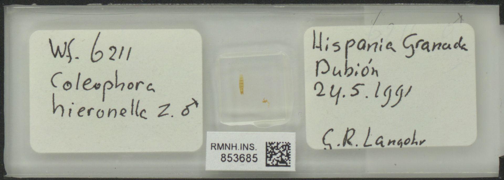 RMNH.INS.853685   Coleophora hieronella Z
