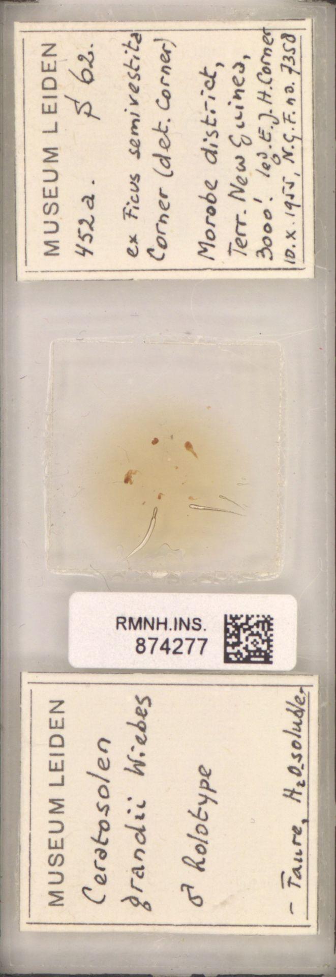 RMNH.INS.874277 | Ceratosolen grandii Wiebes