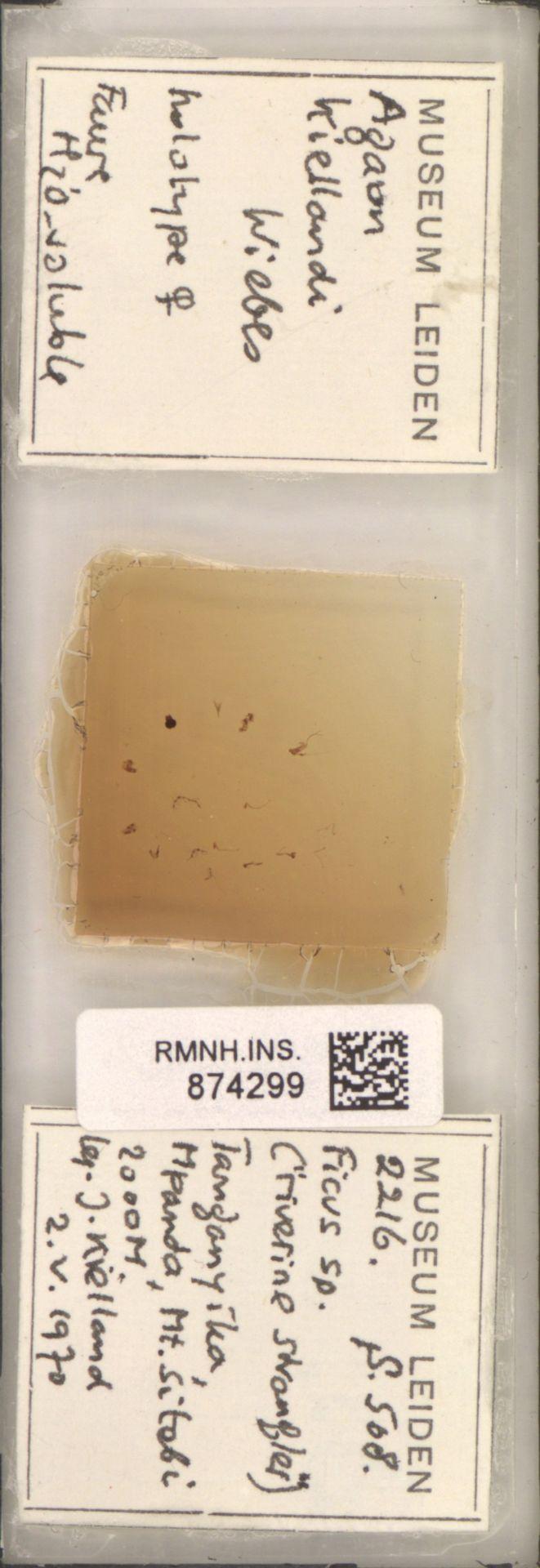 RMNH.INS.874299 | Agaon kiellandi Wiebes