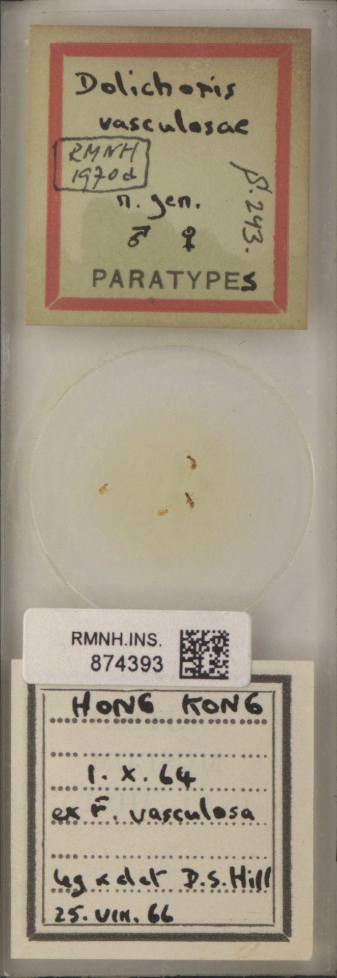RMNH.INS.874393 | Dolichoris vasculosae