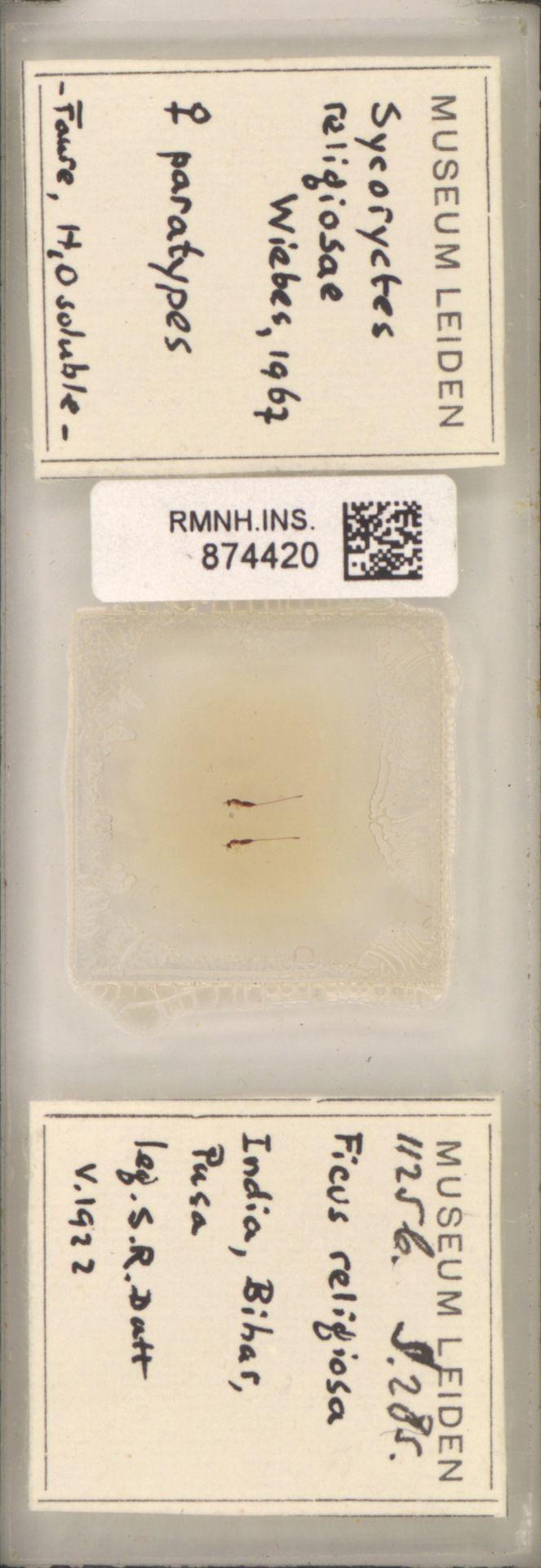 RMNH.INS.874420 | Sycoryctes religiosae Wiebes, 1967