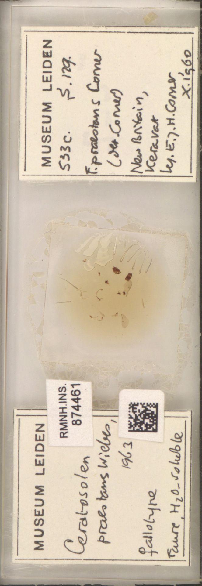 RMNH.INS.874461   Ceratosolen praestans Wiebes, 1963