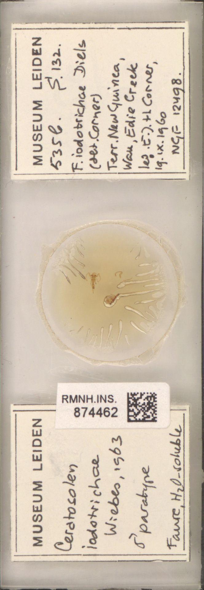 RMNH.INS.874462 | Ceratosolen iodotrichae Wiebes, 1963