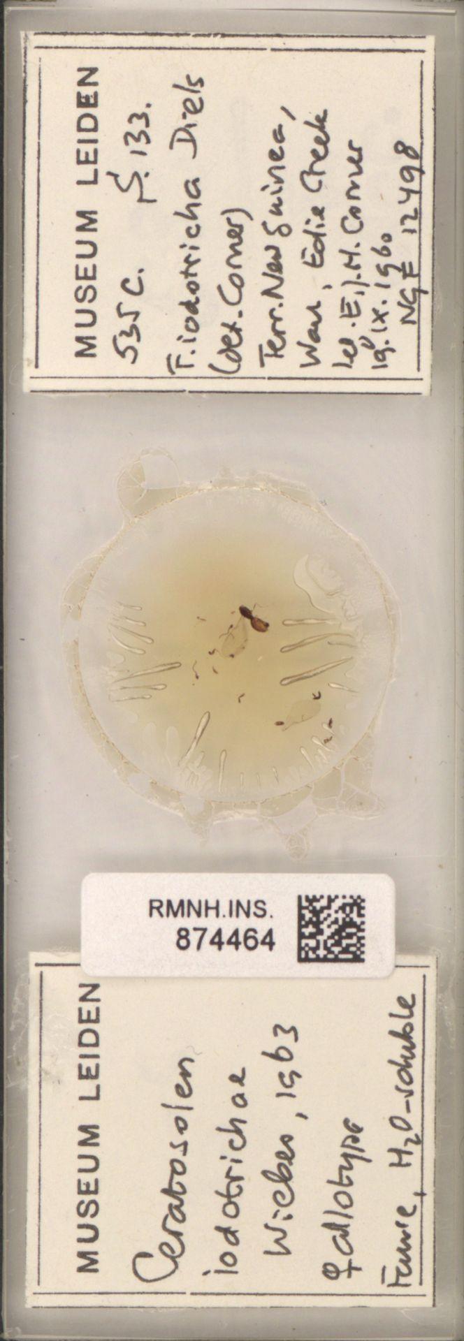 RMNH.INS.874464 | Ceratosolen iodotrichae Wiebes, 1963
