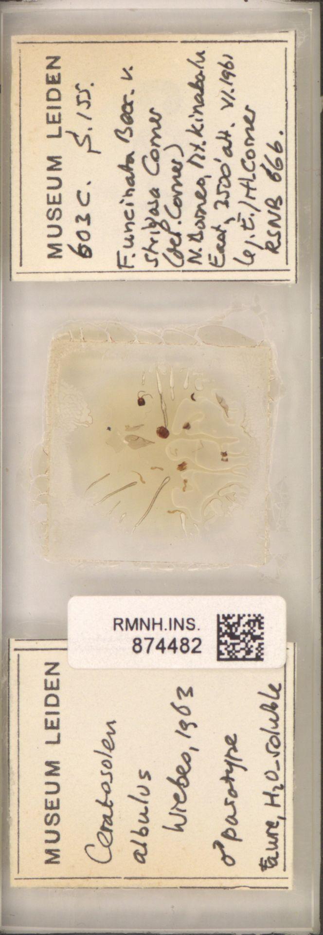 RMNH.INS.874482 | Ceratosolen albulus Wiebes, 1963