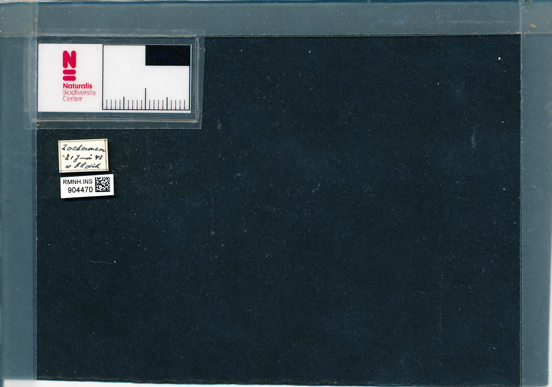 RMNH.INS.904470 | Anisosticta novemdecimpunctata (L.)