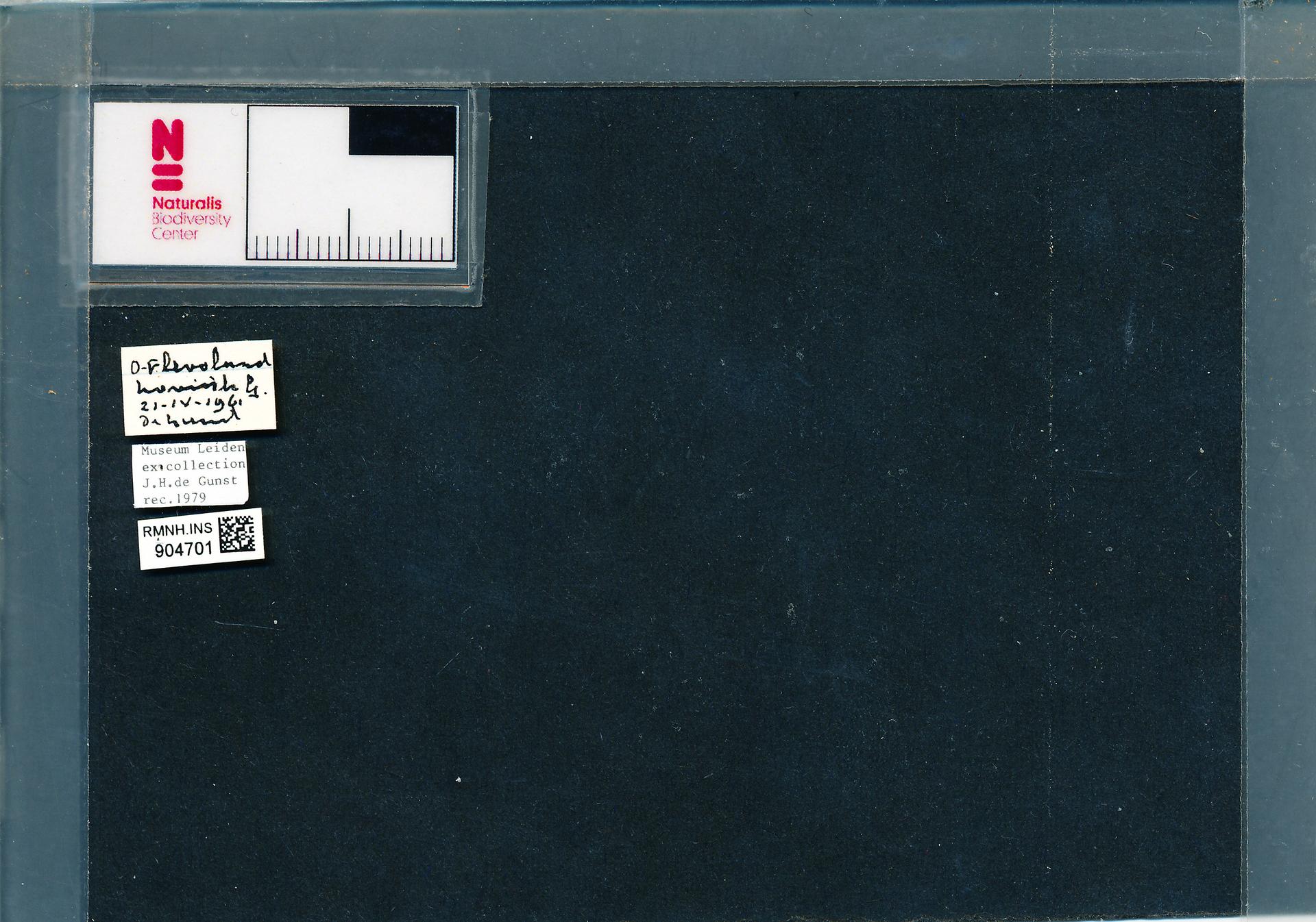 RMNH.INS.904701 | Anisosticta novemdecimpunctata (L.)