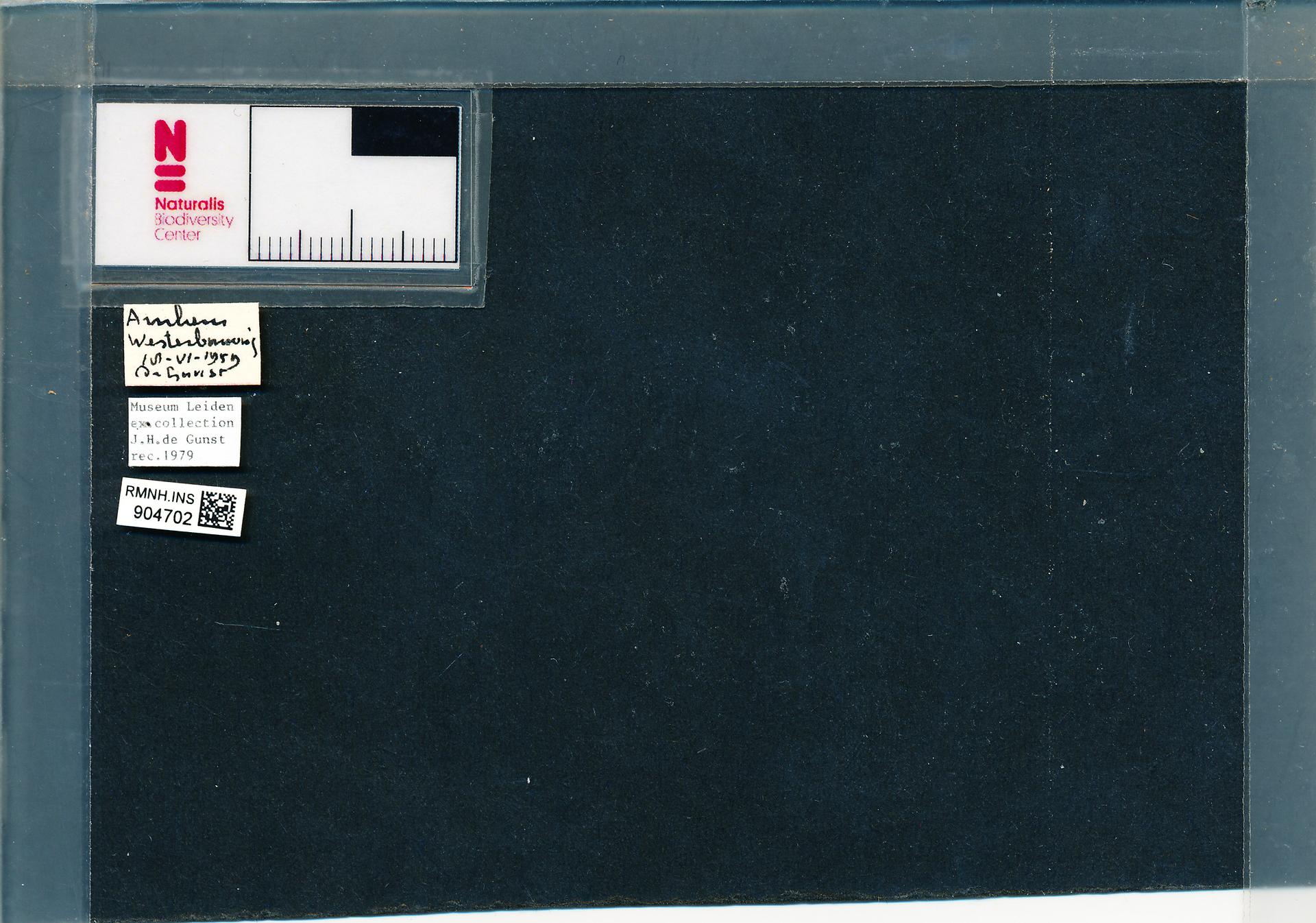 RMNH.INS.904702 | Anisosticta novemdecimpunctata (L.)