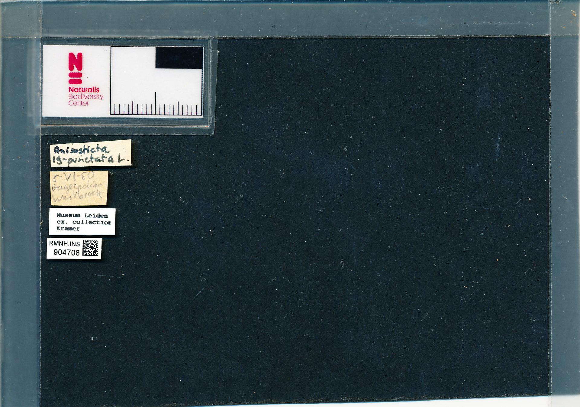 RMNH.INS.904708 | Anisosticta novemdecimpunctata (L.)