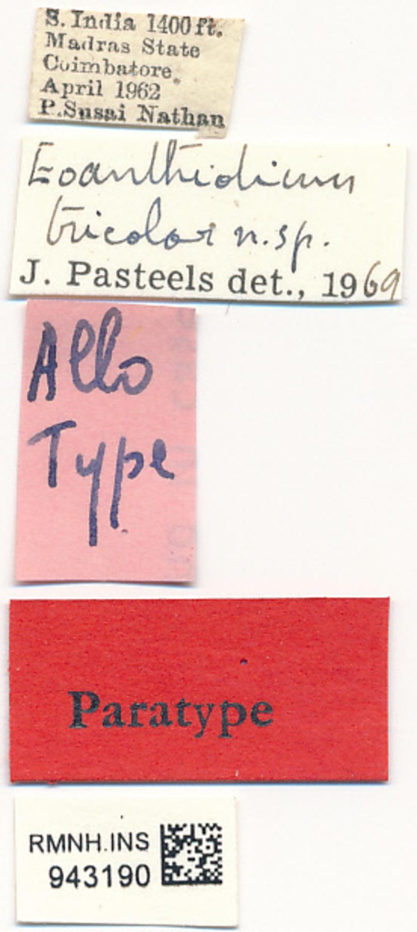 RMNH.INS.943190 | Eoanthidium tricolor Pasteels, 1972