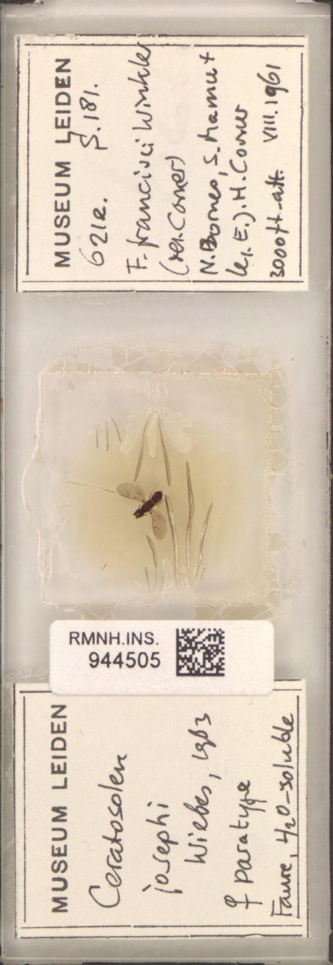 RMNH.INS.944505 | Ceratosolen josephi Wiebes, 1963