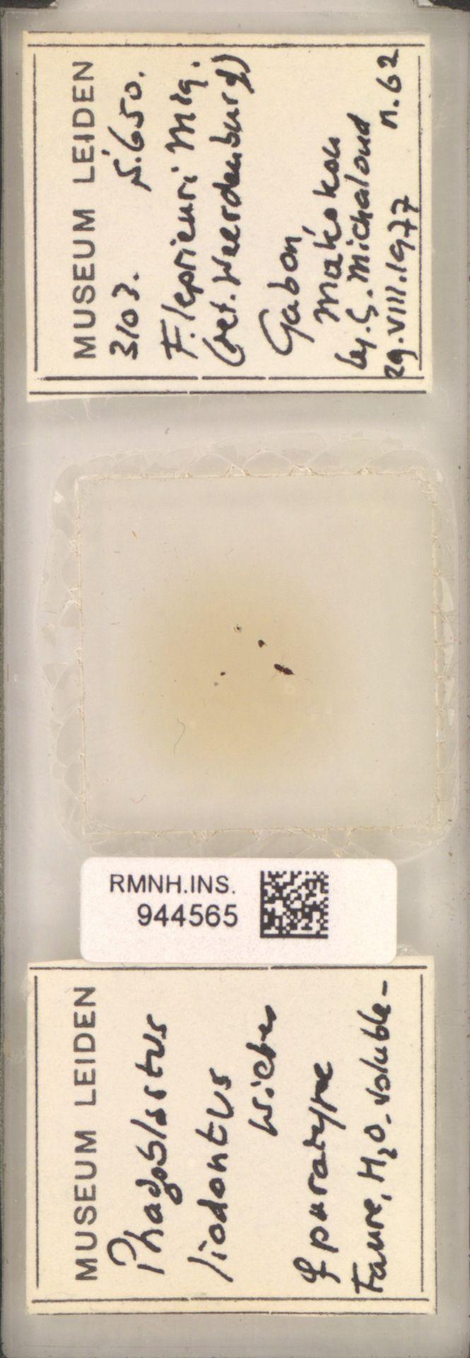 RMNH.INS.944565 | Phagoblastus liodontus Wiebes