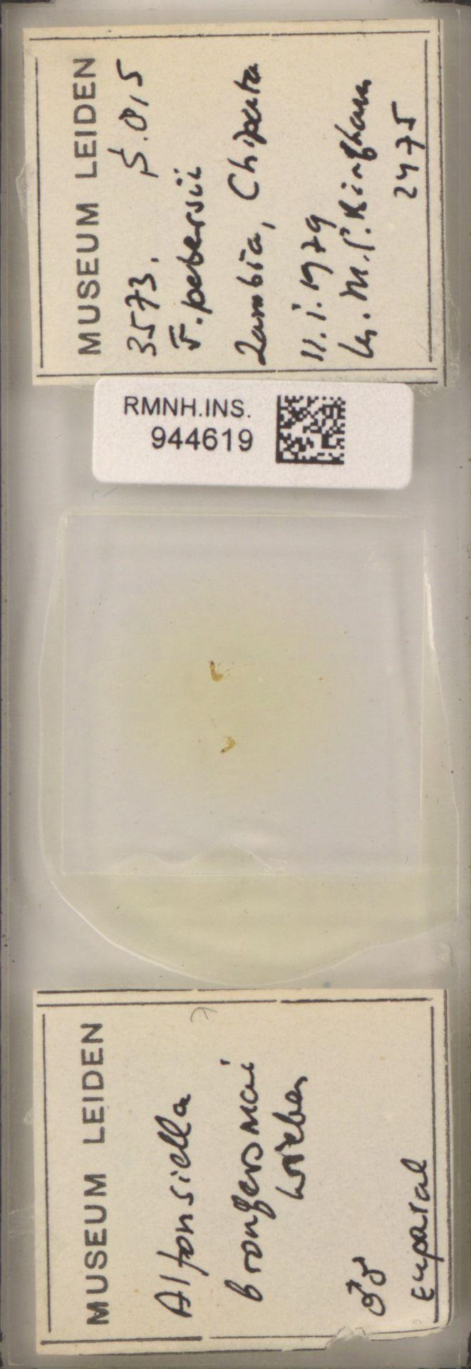 RMNH.INS.944619   Alfonsiella brongersmai (Grandi)