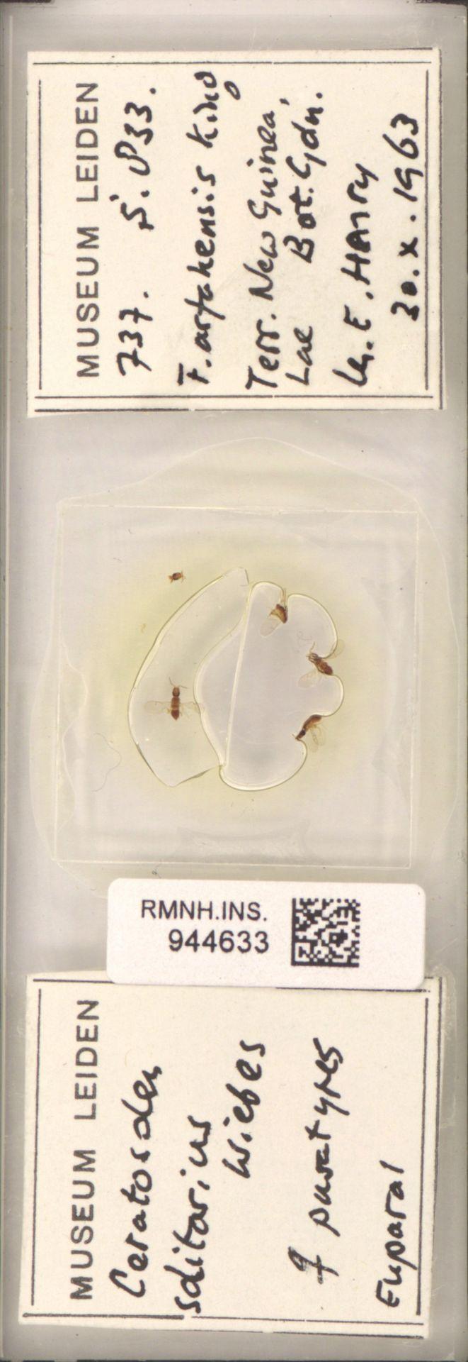 RMNH.INS.944633 | Ceratosolen solitarius Wiebes