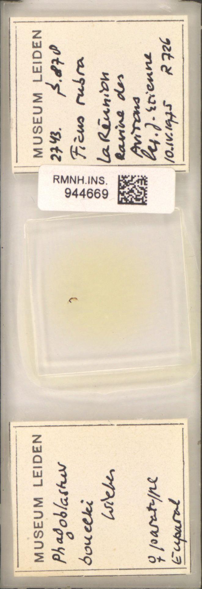 RMNH.INS.944669 | Phagoblastus bouceki Wiebes