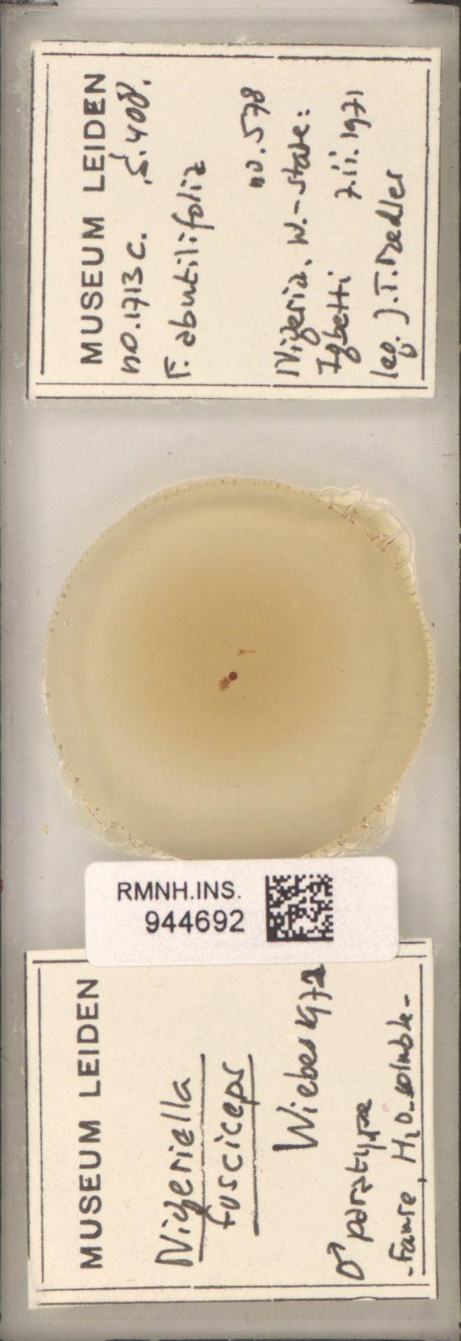 RMNH.INS.944692 | Nigeriella fusciceps Wiebes, 1972