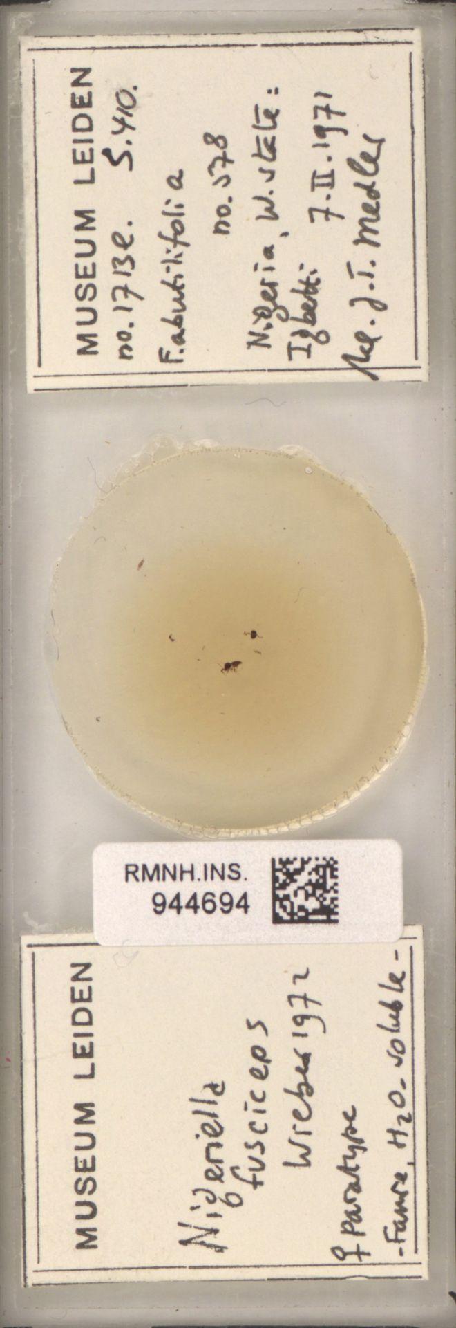 RMNH.INS.944694 | Nigeriella fusciceps Wiebes, 1972