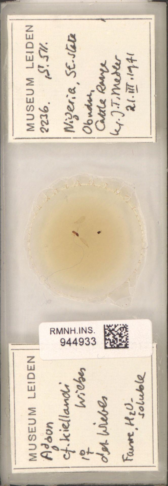 RMNH.INS.944933   Agaon kiellandi Wiebes