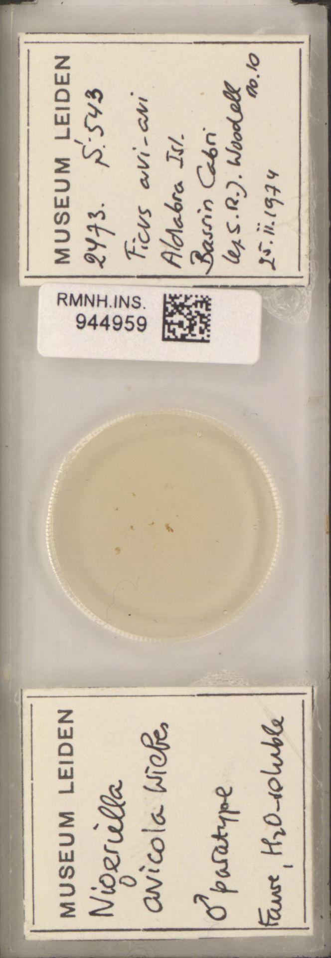 RMNH.INS.944959   Nigeriella avicola Wiebes