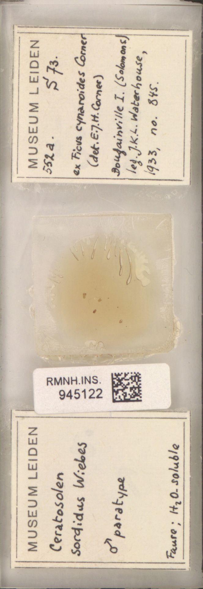 RMNH.INS.945122 | Ceratosolen armipes Wiebes
