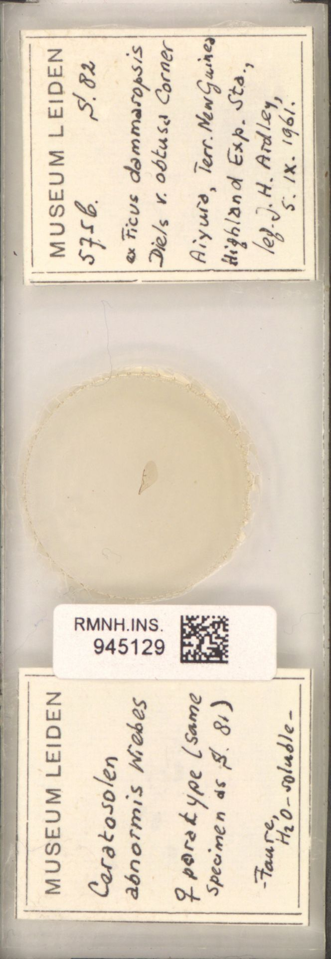 RMNH.INS.945129 | Ceratosolen abnormis Wiebes